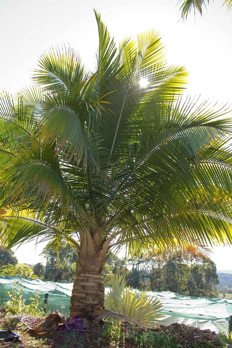 how to take care of palms
